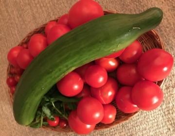 Kui maitsvad ja tervislikud on omakasvatatud tomatid ja kurgid