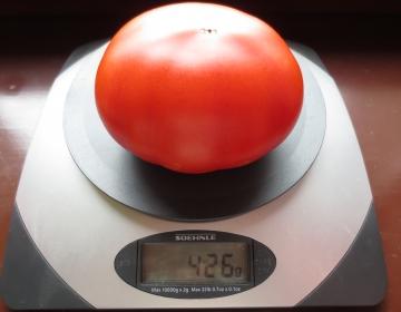 Natuke puudu poolest kilost